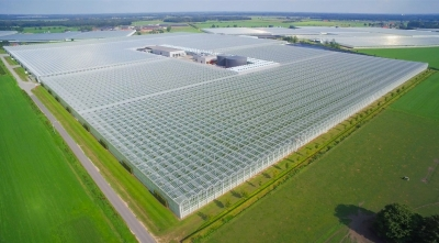 GE to provide Jenbacher engines to Belgium horticulture customer